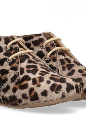 Gimlet Leopard